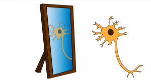 mirror neuron